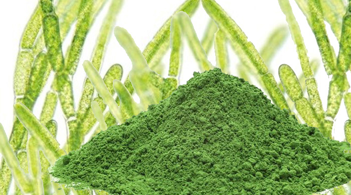 Chlorella is a Detoxifier and Nutrient Rich Algae