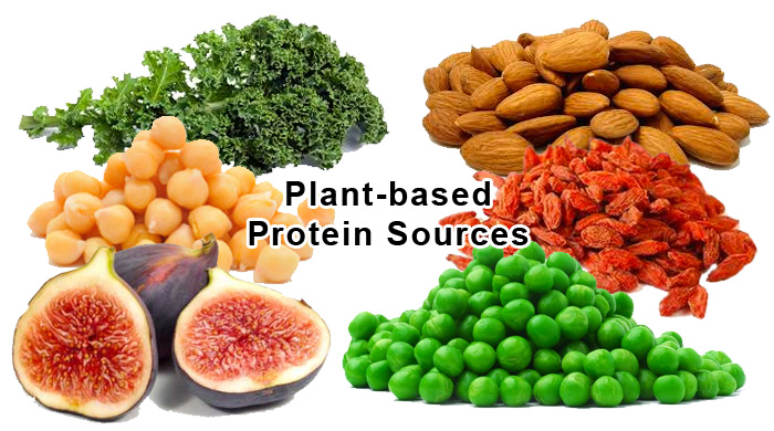 Vegetable Protein Food Sources